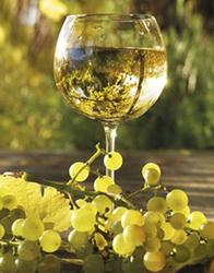 Белые столовые вина